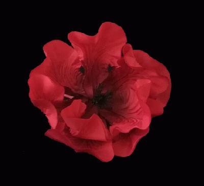 ER 457 Giant Silk Poppy