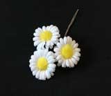ER 561 Natural Daisy /3
