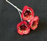ER 565 Red Poppy