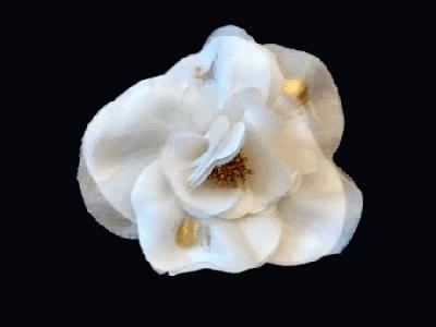 LB 32 Seed Centred Camellia