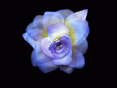 LB 43 Silk/Organza Rose
