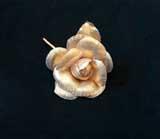 LB 4 Lurex Rose