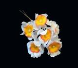LB 51 Narcissus Spray /6