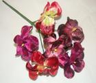ER453 Orchid /6